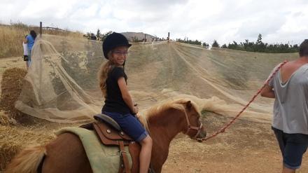 שקד על הסוס, עין זיוון, רמת הגולן
